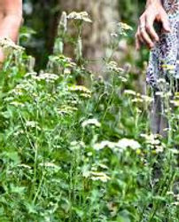 Medical Herbs Trail Trpanj