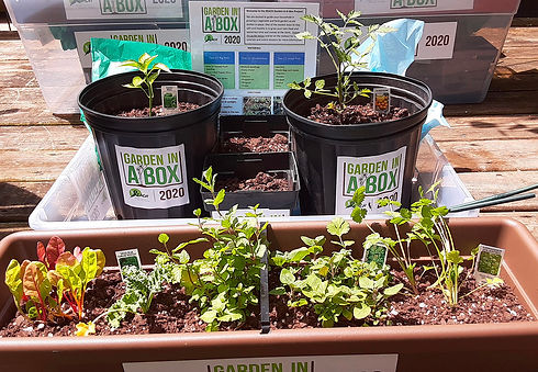 REACH Garden In a Box project