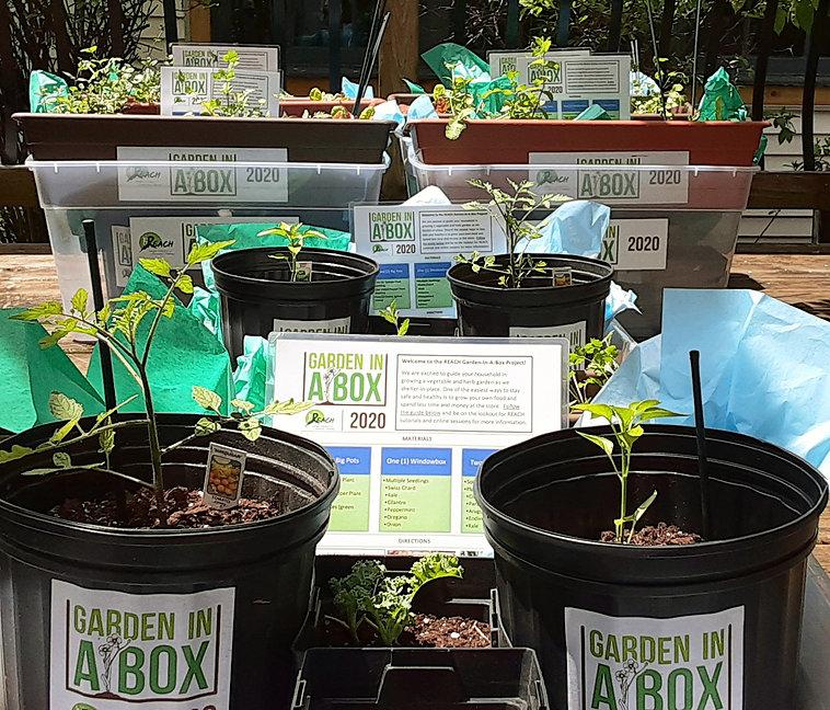 REACH 2020 Pandemic Garden in a Box Special Initiative