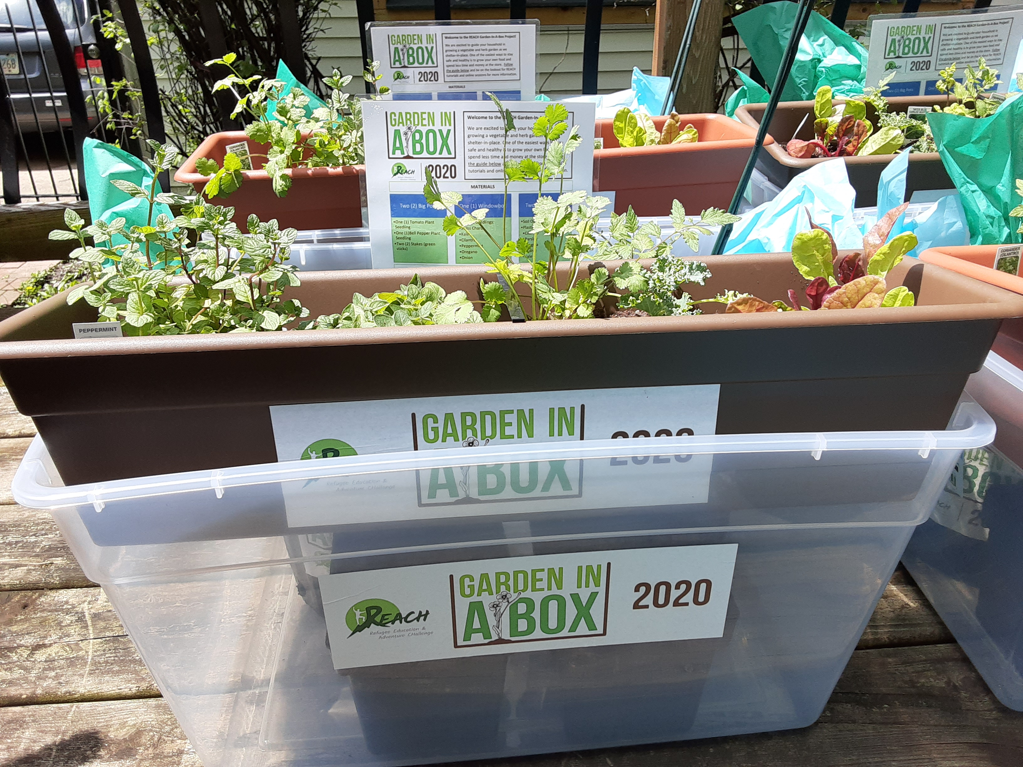 REACH Garden-in-a-Box