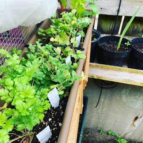 Munti & Lina's Garden