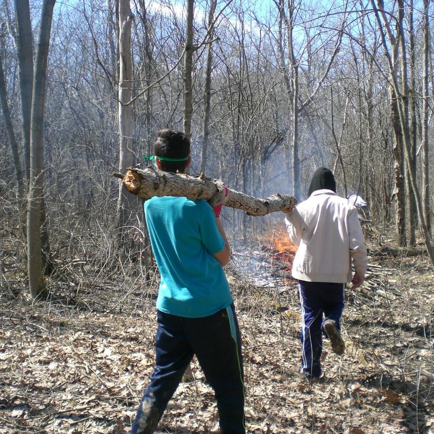 Forest Restoration Work