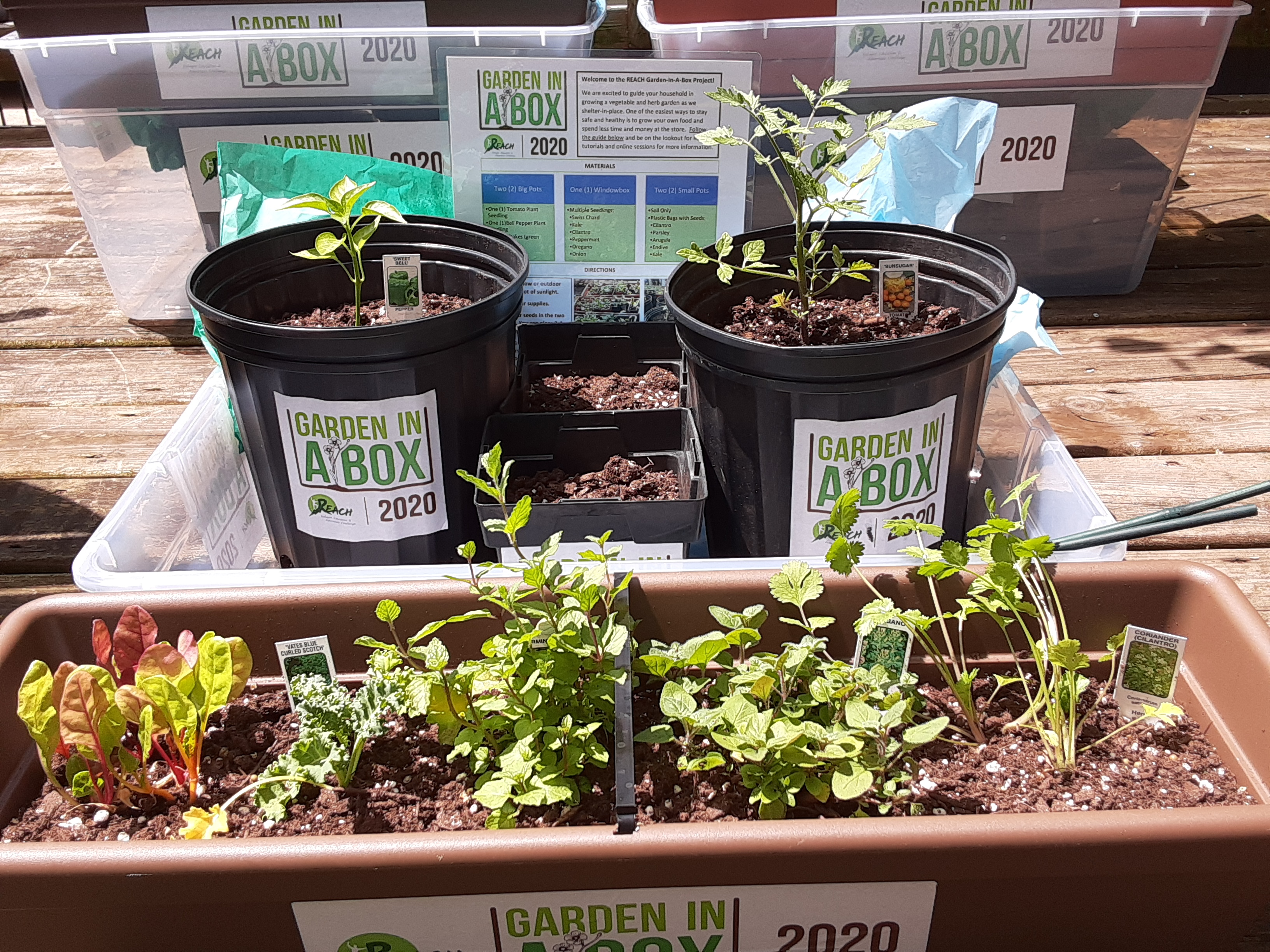 Garden-in-Box Kits