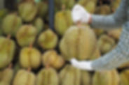 Durians-take-on-technology-as-Singapore-