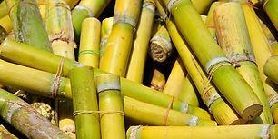 a5944-sugarcane.jpg