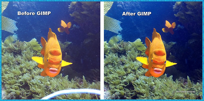 Before and after GIMP images