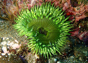 Green anemone photo taken with the Olympus TG-4.
