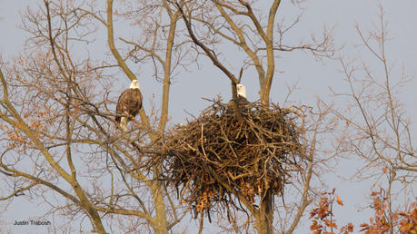 Mom and Dad in Nest