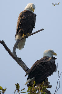 Mom and Dad overseeing their Territory