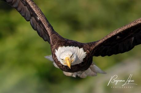 eaglemomflyig--10-4.jpg