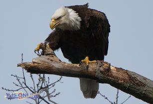 Dad on a perch