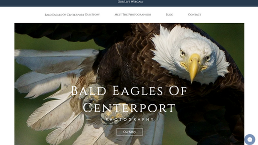 Bald Eagles of Centerport