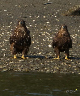 Brother and Sister Eaglet