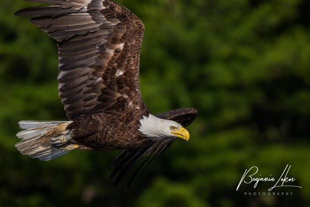 eaglemomflyig--12-4.jpg