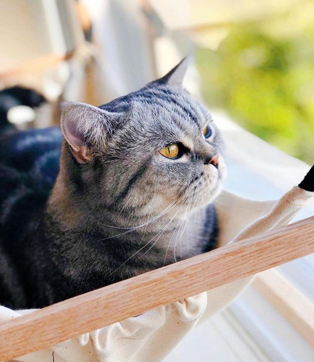 Pet sitting montreal, west island, laval, north shore