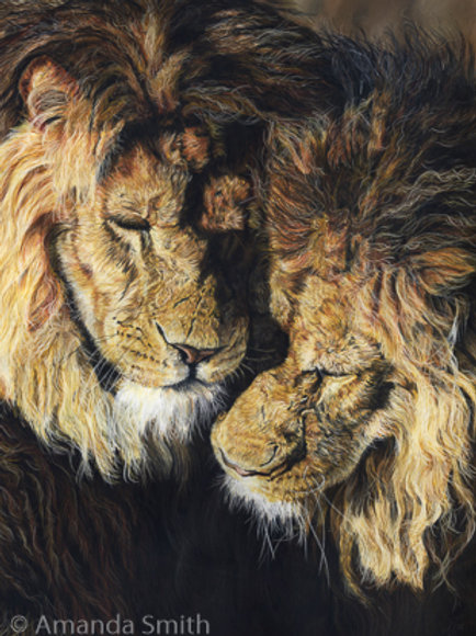 'Brothers'- Lions