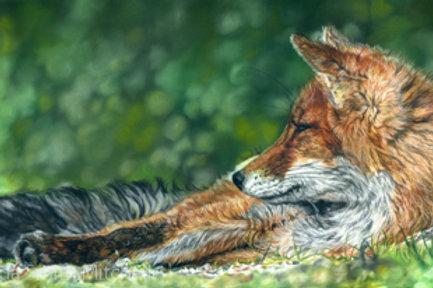 'Lazy Summer Days'- Fox