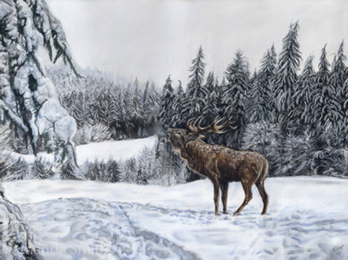 'Forest King'- Stag