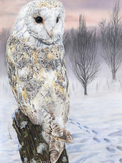 'Winter Dawn'- Owl