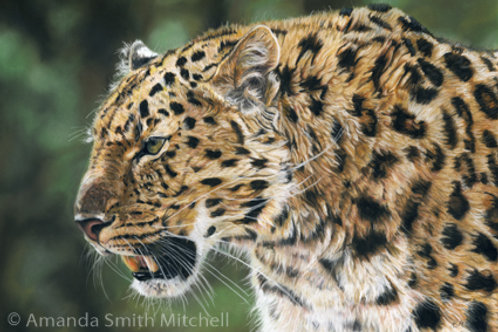 'The Hunter'- Leopard