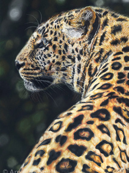 'Majestic'- Leopard