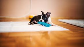5 dicas para estimular a Independência Emocional do seu cão