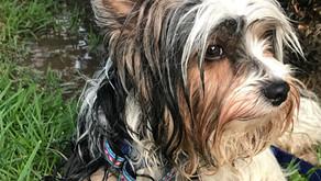 Comportamentos Naturais dos Cães