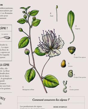 capre_illustration_on_va_deguster_litalie_illustrateur_cuisine.jpg