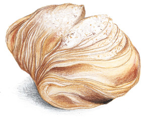 patisserie_illustration_on_va_deguster_litalie_illustrateur_cuisine.jpg