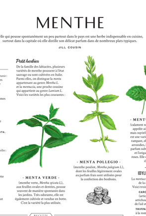 menthe_PLANCHE_illustration_on_va_deguster_litalie_illustrateur_cuisine.jpg