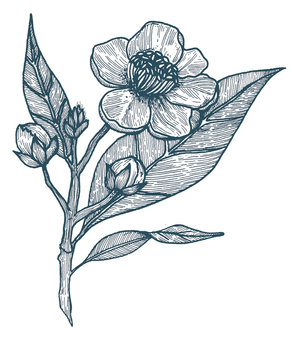 KORYO_illustration_MIEL_DOUCHE_CARRE_edi