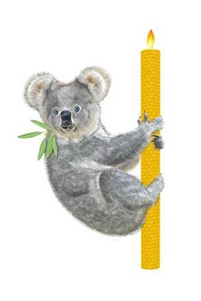 apis_cera_koala_illustration_graphiste_s