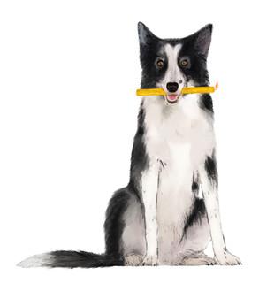 Apis Cera illustration chien