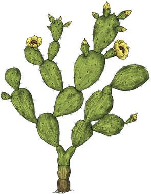 cactus_illustration_on_va_deguster_litalie_illustrateur_cuisine.jpg