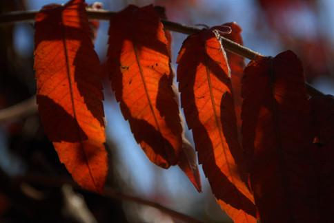 Autumn shadows