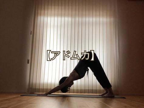 【アドムカ】