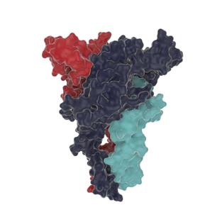 P2X7 receptor