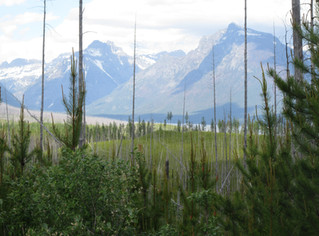 6 Lessons I Learned Planning A Trip to Glacier National Park (Part 2)