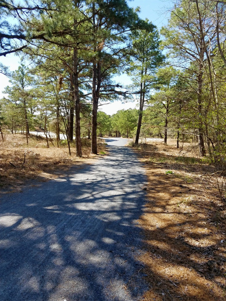 Spend the Day at Cape Henlopen State Park!