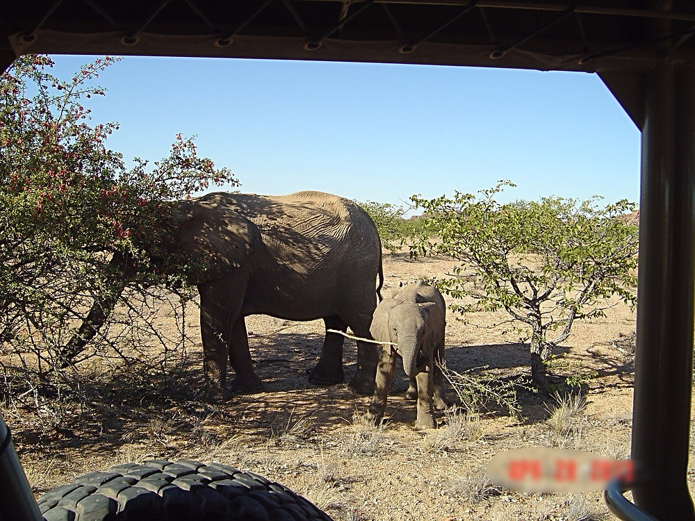Mama and Baby Elephant from Jeep. Namibia