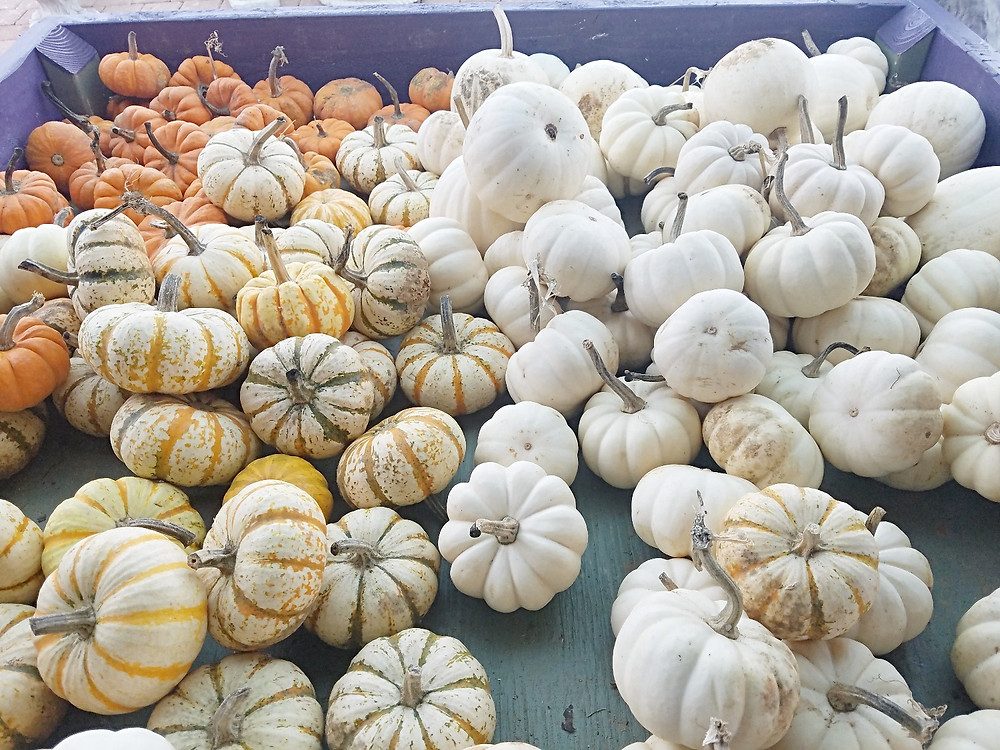 Traveleidoscope: Pumpkin-palooza!