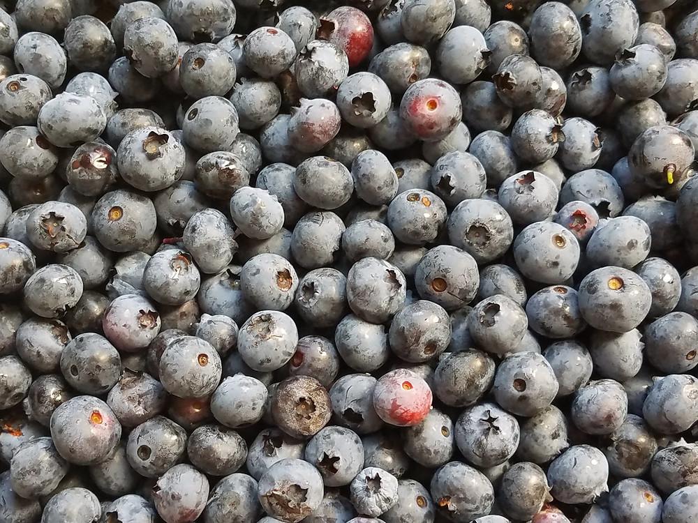 photo of blueberries
