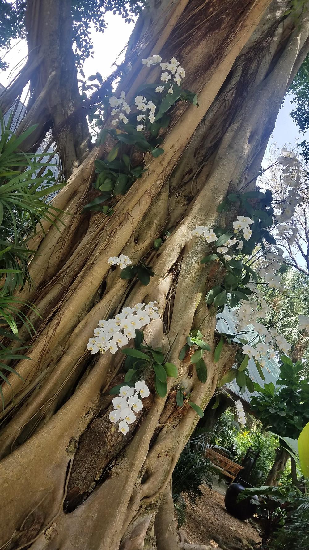 Traveleidoscope: RF Orchids, Homestead, Florida