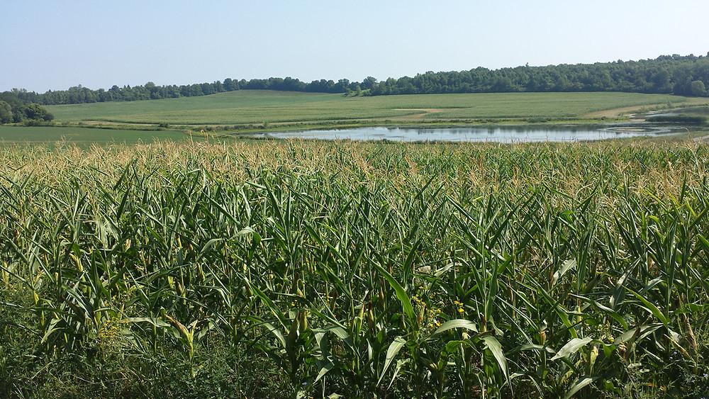 Farmlands, Finger Lakes, New York