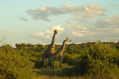 Let's Go on Safari! (Part 2)