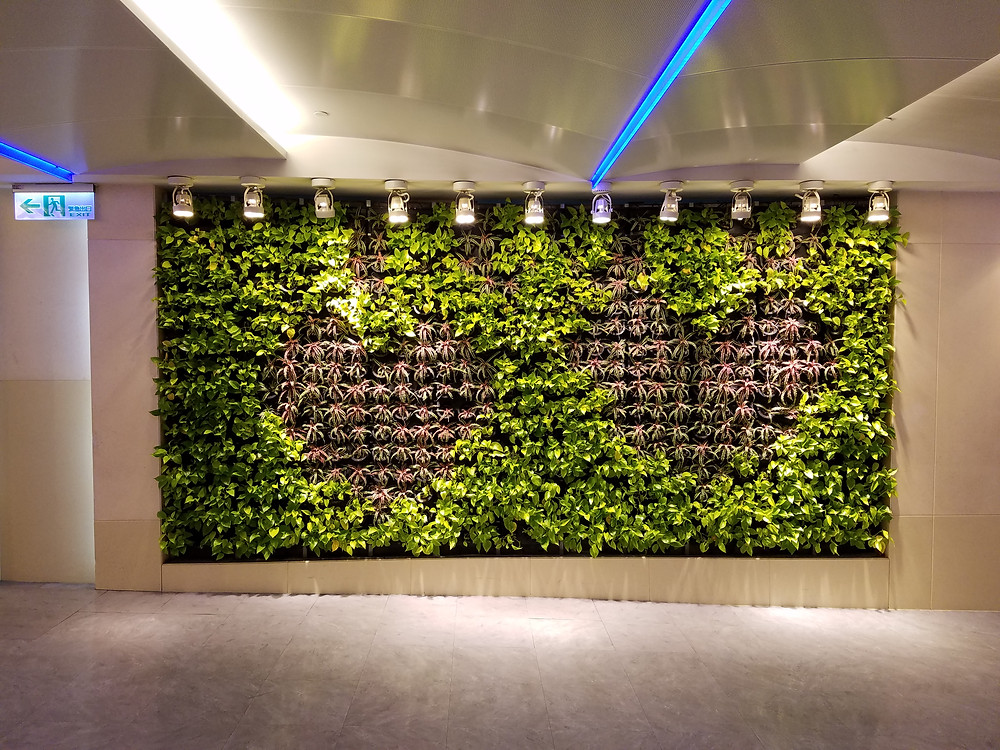 Photo of Living Wall in Taipei Airport, Taiwan