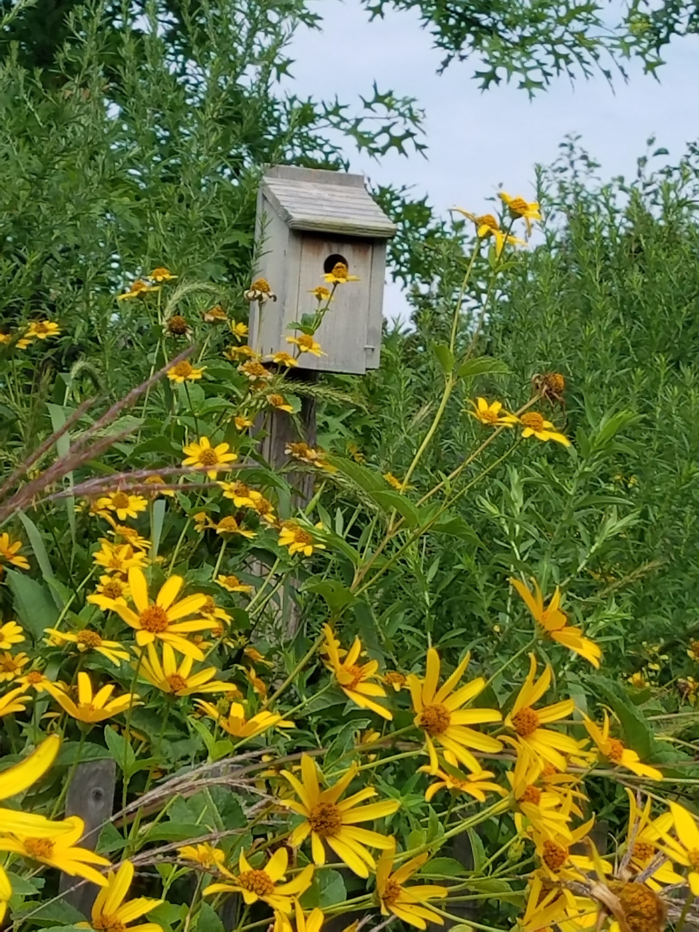 Birdhouses are all over Governors Island