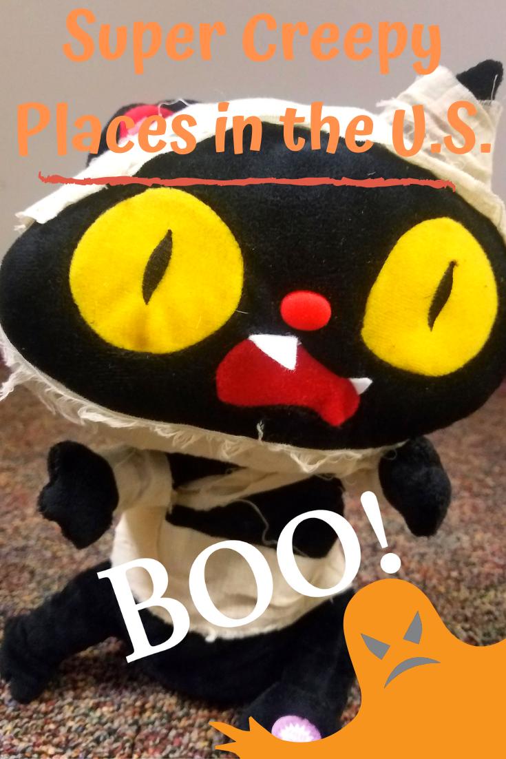 Spooky Halloween stuffed cat