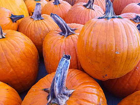 5 Places to Celebrate Halloween