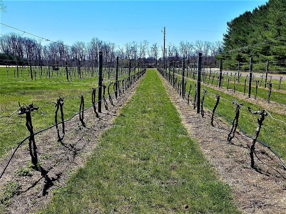 Bellview Winery, NJ